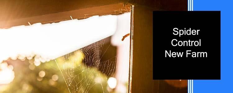 Spider Control New Farm